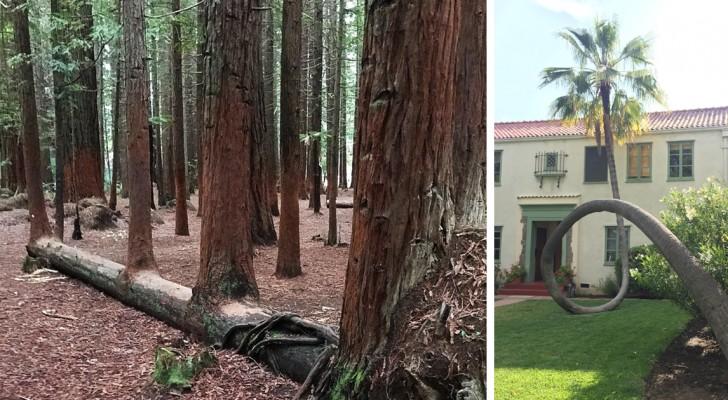 19 zähe Bäume, die sich weigern zu sterben
