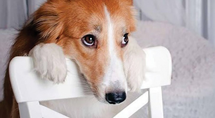 Prima di sgridare il cane pensateci due volte: ecco cosa significa quello sguardo