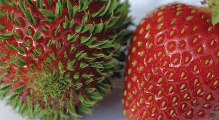 15 verschrikkelijke foto's van fruit en groente die te snel uitlopers hebben gekregen