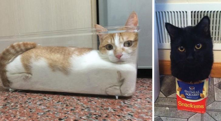 21 fois où les chats ont pensé:
