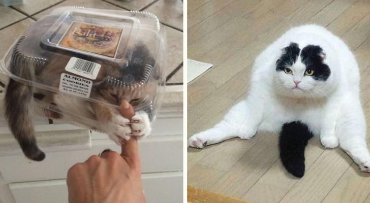 21 photos de chats devant lesquelles il est impossible de ne pas rire