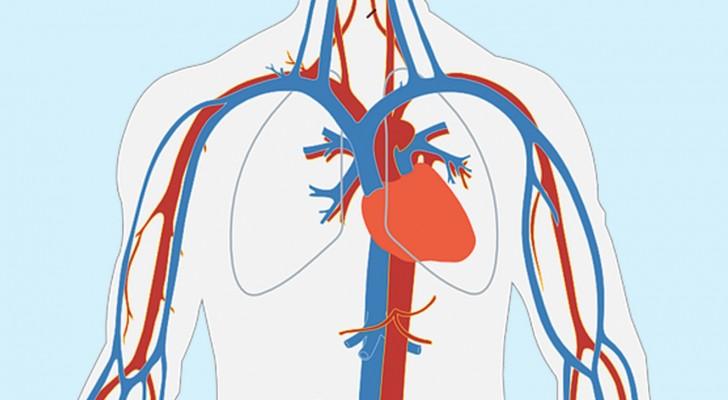 Einen Monat vor einem Herzinfarkt, warnt dich dein Körper mit diesen 8 Symptomen