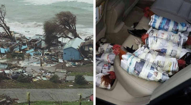17 immagini rivelano quanto è stato davvero devastante l'uragano Irma
