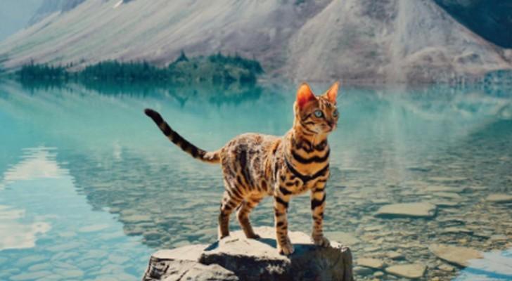 Nous vous présentons Suki, le chat aventurier qui profite de la vie bien plus que nous tous !