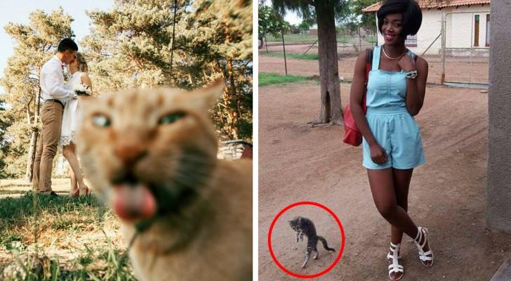 27 photos GÉNIALES (grâce à l'intrusion du chat!)