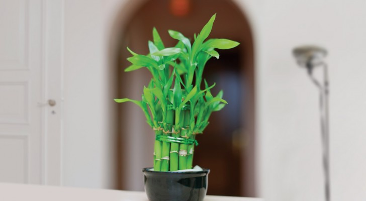 Trois plantes qui attireront les énergies positives et la richesse dans votre intérieur