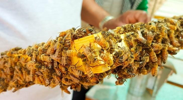 I neonicotinoidi sono presenti nel miele di TUTTO il mondo, lo rivela un nuovo studio