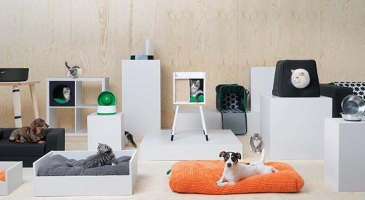 IKEA vient de lancer une ligne de meubles pour animaux et c'est déjà un succès incroyable