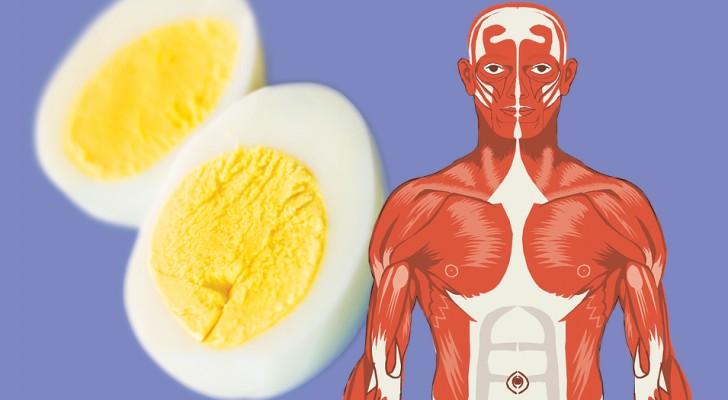 8 cose che accadono al tuo corpo quando inizi a mangiare 2 uova al giorno