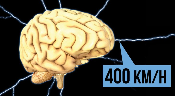 25 ongelofelijke feiten over het menselijk lichaam