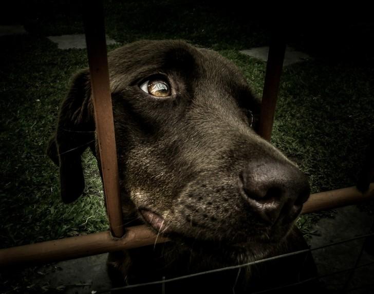 La California è il 1° stato USA a imporre ai negozi di animali la vendita di cani e gatti randagi