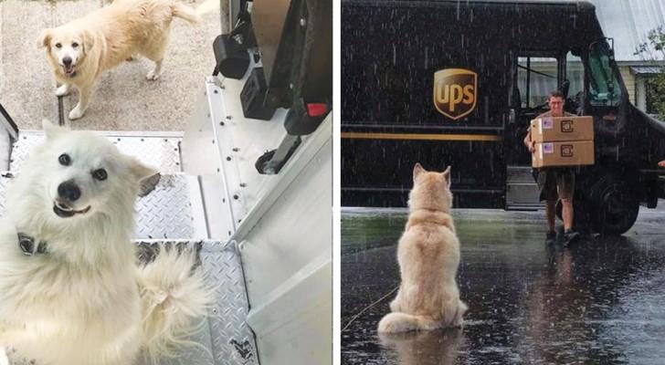 C'è una pagina Facebook su cui i corrieri UPS postano le foto dei cani che incontrano durante le spedizioni