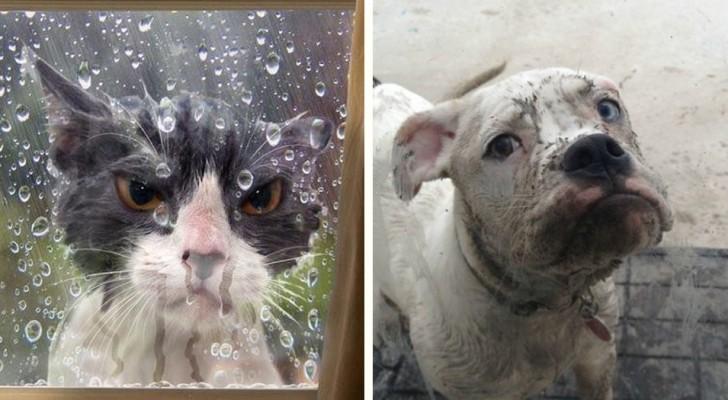22 huisdieren die naar buiten moesten maar daar absoluut niet wilden blijven