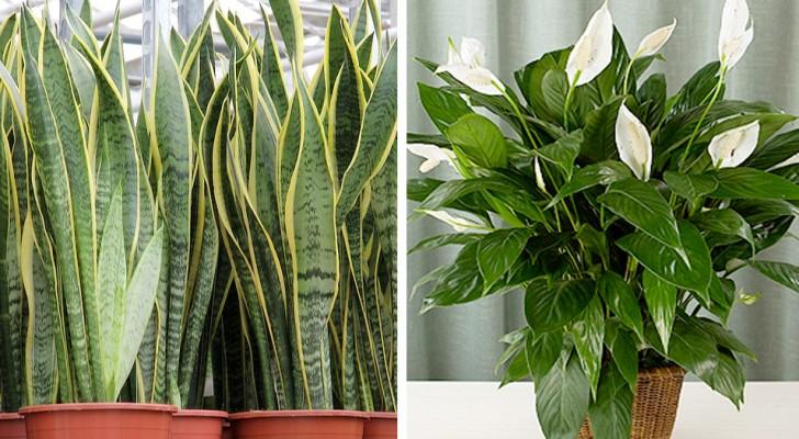 7 planten die de luchtkwaliteit in huis verbeteren
