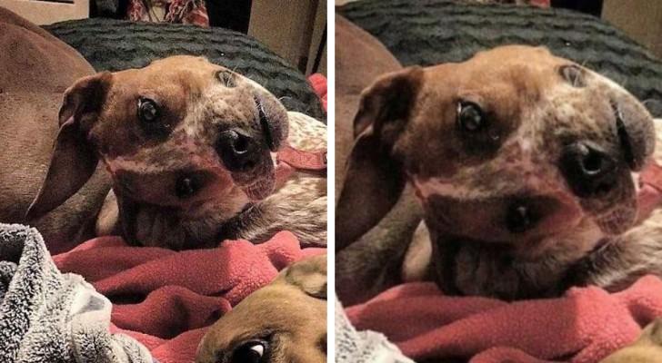 Het lukt mensen niet om te snappen wat er niet klopt aan deze hond. Jullie wel?