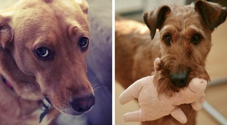 9 gesti dei cani che possiedono un preciso significato