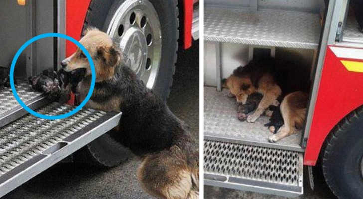 13 volte in cui i cani hanno sorpreso gli umani con i loro atti incredibilmente eroici
