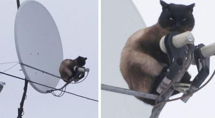 24 foto degli animali domestici più dispettosi di sempre