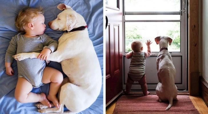 Questo cane maltrattato ha ritrovato la serenità accanto a un bebè: le loro immagini sono adorabili