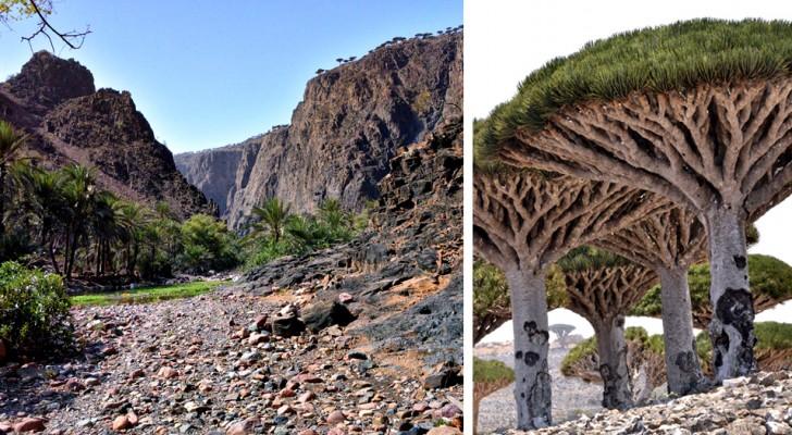 Socotra is een schitterend eiland zo afgelegen dat het  bezoekers 'Buitenaards' aandoet