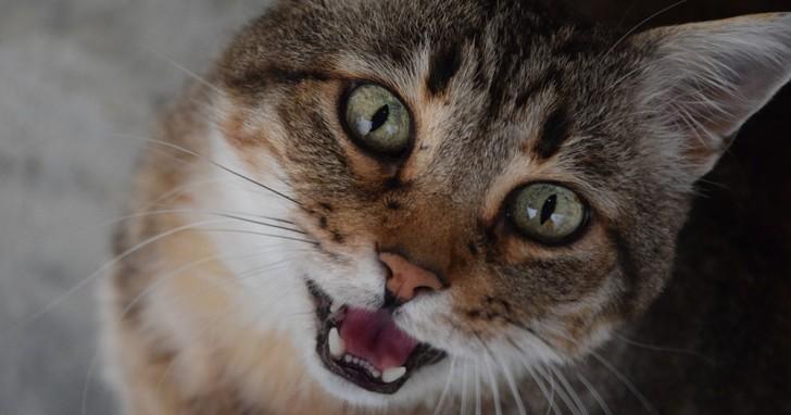 Katzen sprechen zwei Sprachen: Eine haben sie entwickelt, damit wir Menschen sie verstehen
