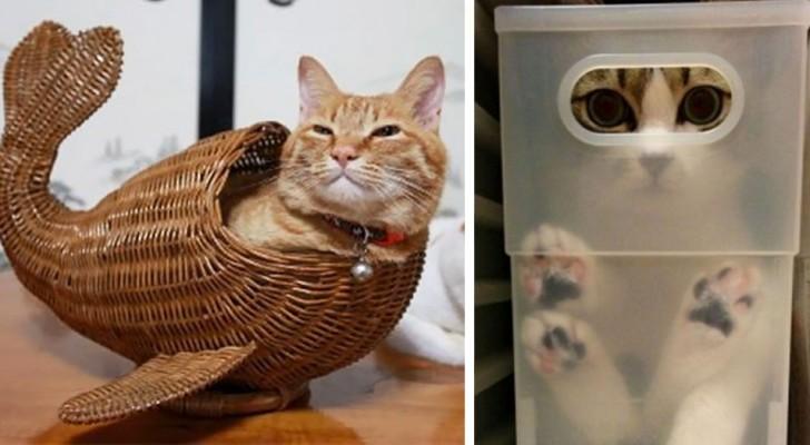 25 katten die hebben laten zien uitzonderlijke contortionisten te zijn