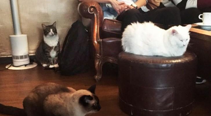 7 bellissimi locali in cui puoi sorseggiare una bevanda calda circondato dai gatti