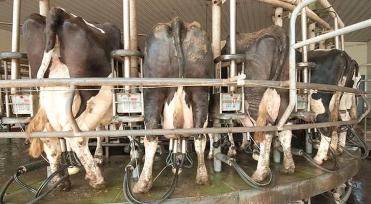 Die 7 Sünden des Fleischmarkts von denen man nicht spricht