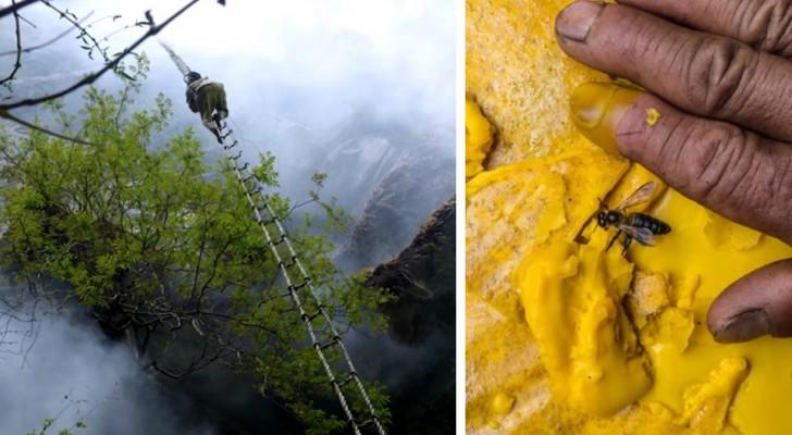 Het verhaal van de laatste honingjager en hoe hij geestverruimende honing van reuzenhoningbijen verzamelt