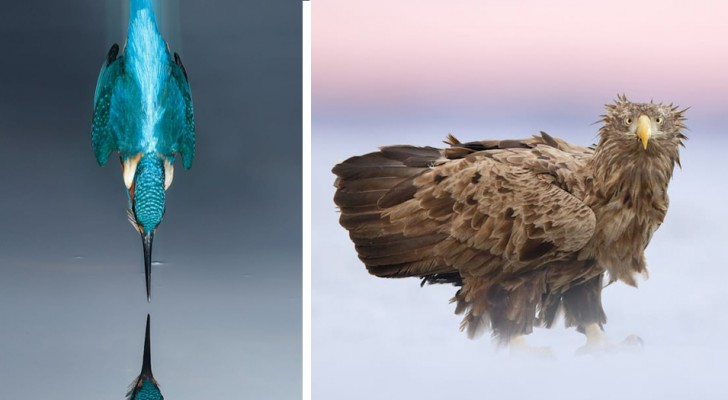 Toute la superbe et la grâce des oiseaux dans une sélection d'images de très haut niveau