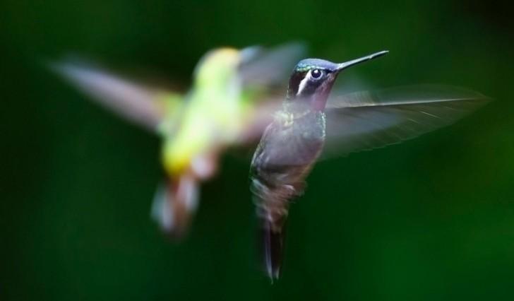 Hoe kunnen vogels zich oriënteren wanneer zij migreren? Twee onderzoeken laten zien hoe