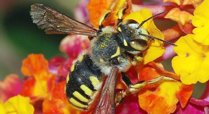 Les abeilles sont considérées comme les créatures les plus importantes de la planète, mais leur nombre continue de diminuer