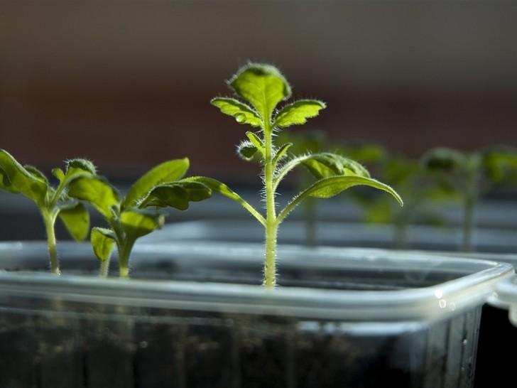 Les scientifiques découvrent que les plantes ont un