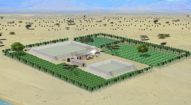 Cultiver dans le désert sans avoir besoin d'eau : les serres révolutionnaires de Charlie Paton