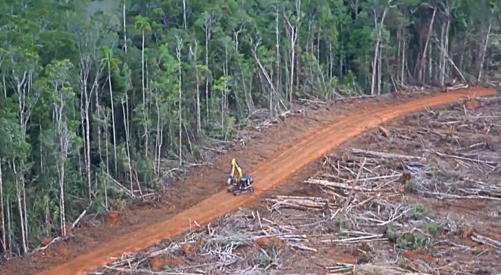 Des forêts géantes rasées au sol pour produire de l'huile de palme : les images parlent d'elles-mêmes