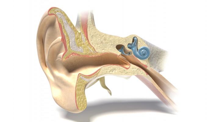 Eine neue Entdeckung zur Behandlung von Gehörverlust: Millionen von Menschen können wieder hoffen