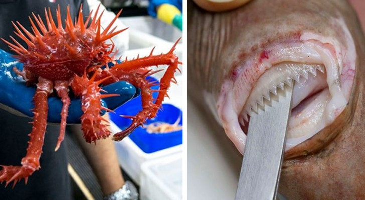 Wetenschappers publiceren de foto's van de dieren die in de dieptes van zeeën wonen en deze zijn hartstikke eng