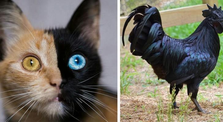 20 volte in cui Madre Natura ha voluto dare un tocco di colore inusuale alle sue creature