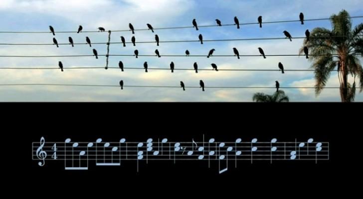 Een muzikant zet vogels die op kabels zitten om in bladmuziek en de melodie die eruit voortkomt is betoverend mooi