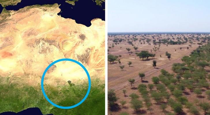 In Afrika zijn ze de Grote Groene Muur aan het bouwen, een muur die bestaat uit bomen die de aarde moeten redden