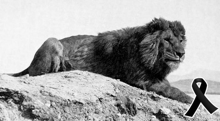 10 affascinanti specie animali che si sono estinte nell'ultimo secolo... a causa dell'uomo