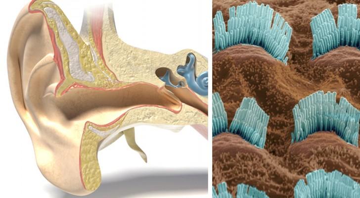 Gehoor herstellen door middel van licht: optische stimulatie zou de doorbraak kunnen zijn voor gehoorproblemen