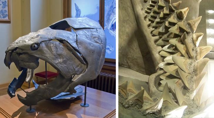 10 créatures monstrueuses dont nous ne regrettons certainement pas l'extinction.
