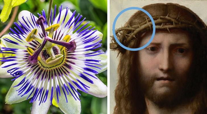 De Passie van Christus, de Passiebloem en de bijzondere symboliek die de twee met elkaar verbindt