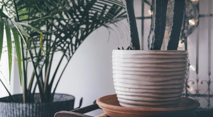 Ecco le 3 piante che dovresti assolutamente avere in casa secondo la tradizione cinese