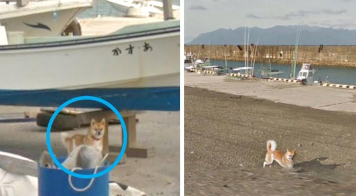 Il lavoro di Google Street View mandato in fumo da un cane: compare in tutti i fotogrammi scattati