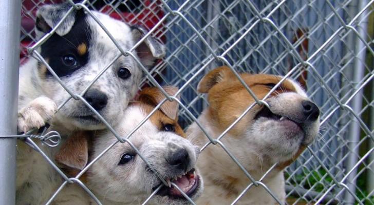 Nella zona di esclusione di Chernobyl vivono centinaia di cani - e nessuno fino ad ora se ne è mai occupato