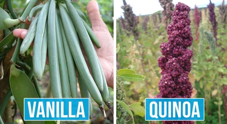Ces 11 photos montrent que nous ne savons presque rien de l'apparence originale des aliments que nous achetons