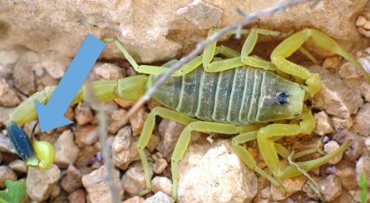 Le venin de scorpion est le liquide le plus cher au monde, 39 millions pour moins de 4 litres : voici pourquoi