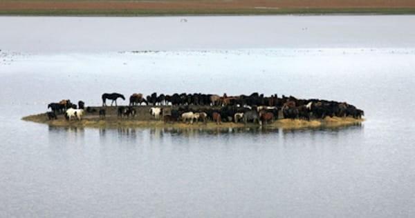 100 Pferde waren 3 Tage lang auf einer Insel gefangen, aber 6 Frauen haben beschlossen, sie zu retten!